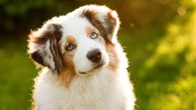 آخرین خداحافظی یک سگ از صاحبش