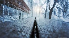 عکاسی از جنگل در زمستان