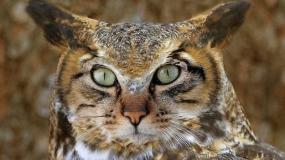 تلفیق جالب عکس پرندگان و گربه سانان و خلق تصاویری دیدنی