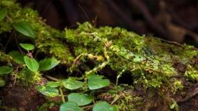خلاقیت حیوانات و حشرات مختلف در استتار کردن