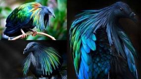 عکاسی از زیباترین گونه های کبوتر