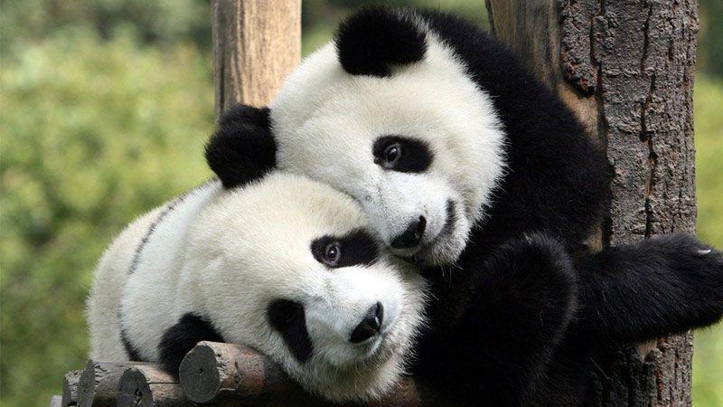 نمایش عشق و علاقه در دنیای حیوانات-1