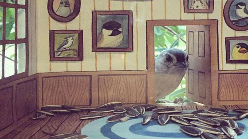 عکاسی از پرندگان به شیوه جدید