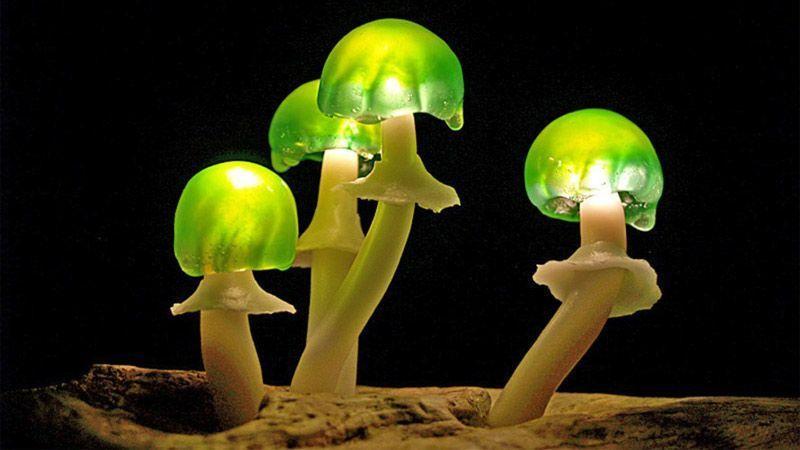 هنرمند آلمانی و ساخت چراغهایی متفاوت از جنس طبیعت-