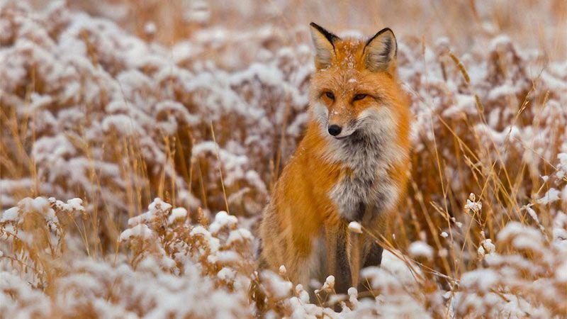 عکاسی از حیوانات بامزه