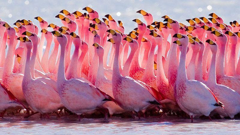 عکاسی از فلامینگو در گرامیداشت روز جهانی این پرنده