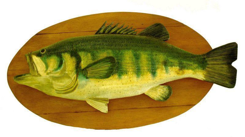 ماهی هایی که نباید خورد