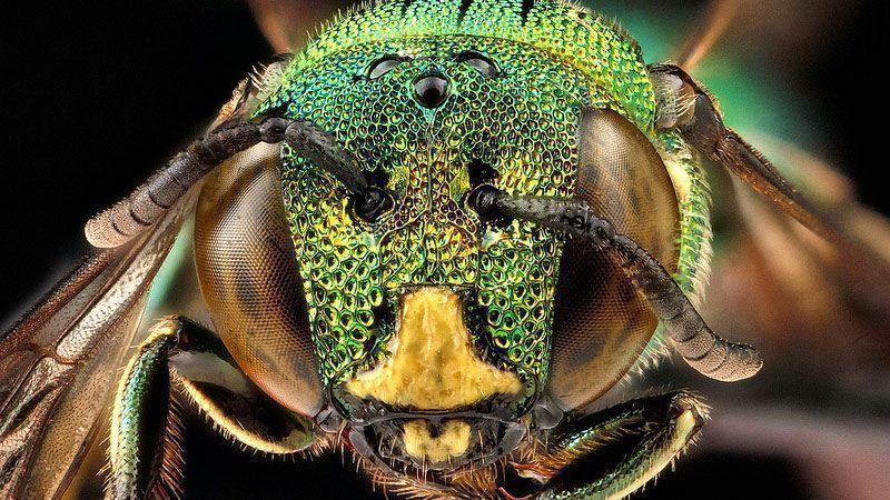 عکاسی از زنبورها در قالب یک برنامه تحقیقاتی