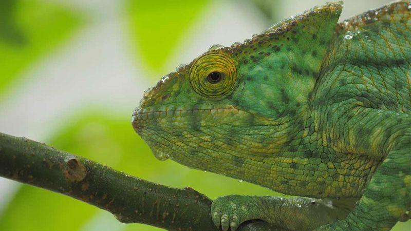 تصاویر حیات وحش تماشایی ماداگاسکار