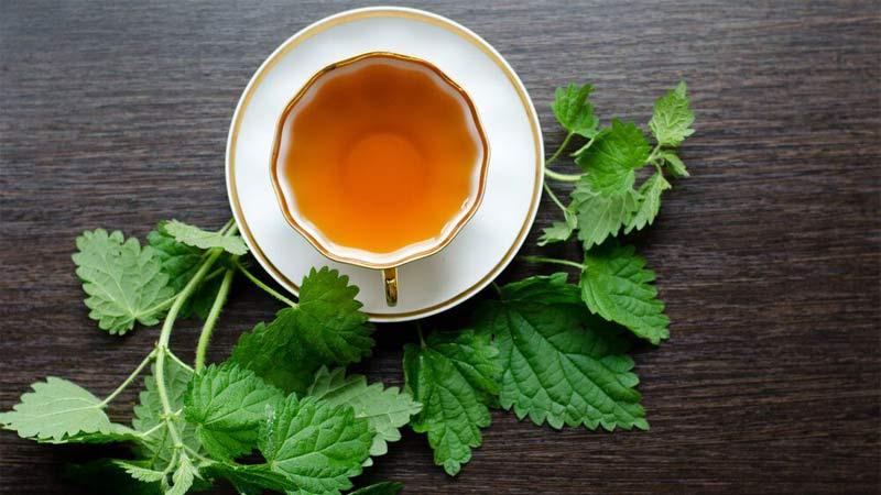 فواید نوشیدن چای گزنه