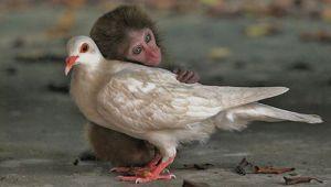 نمایش عشق و علاقه در دنیای حیوانات