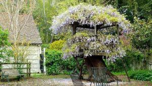 درختی که خانهی گلدانها شده!
