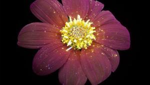 عکاسی از گل و گیاه با استفاده از نور فرا بنفش