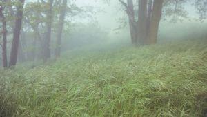 عکاسی از مه