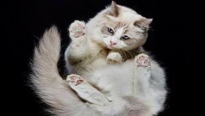 عکاسی از گربه ها به شیوه ای جدید