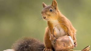عکاسی خلاقانه از سنجابها