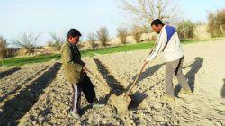 ارائه تسهیلات ۱۵ و ۳۰ میلیون تومانی به کشاورزان و  نیازمندان کمیته امداد