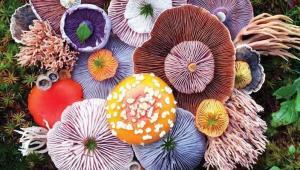 عکاسی از قارچ های وحشی توسط جیل بلیس